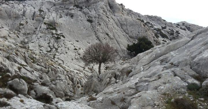 Bentruxu: diario dalla Sardegna