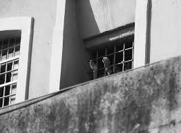 Alcune brevi dal carcere di Piacenza