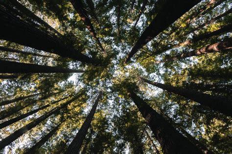 La monocultura della mente. La colonizzazione di Amazzonia e Cerrado da parte dell'agronindustria